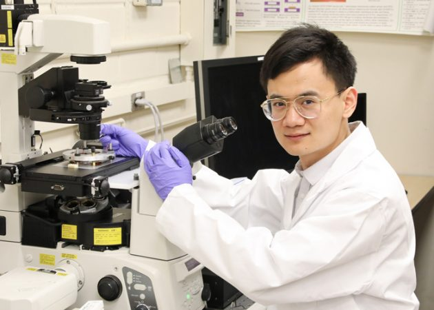 Professor Yu Sun and his team have built magnetic 'tweezers' that can probe inside human cells with unprecedented precision, U of T Engineering News